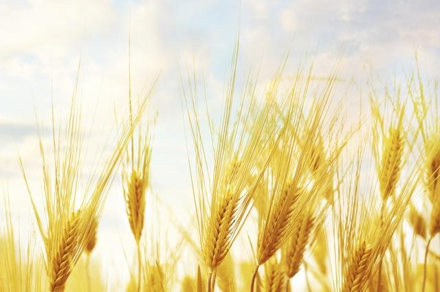 Pentecost Harvest